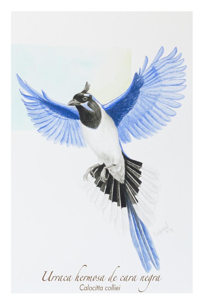 Sandra Ezquivel: el color de las aves