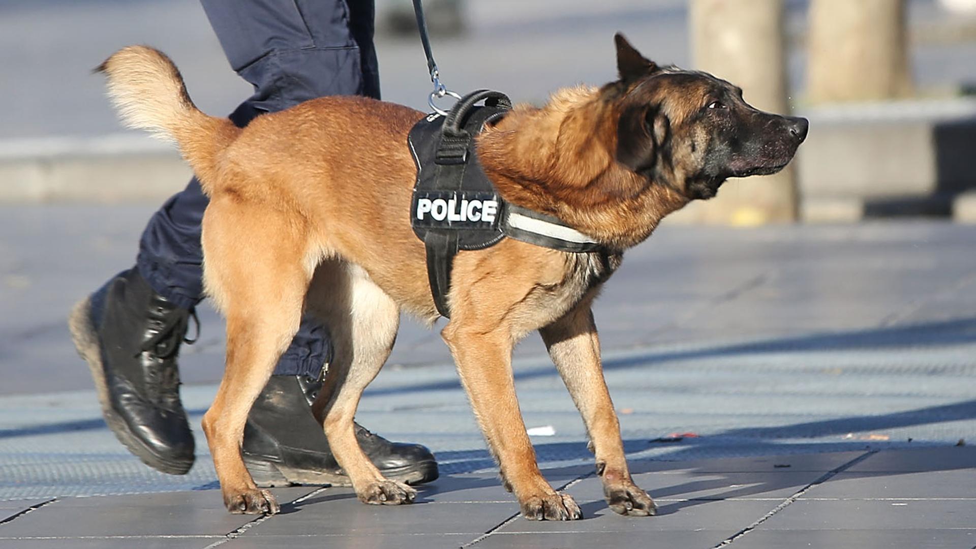 diesel-perro-policia