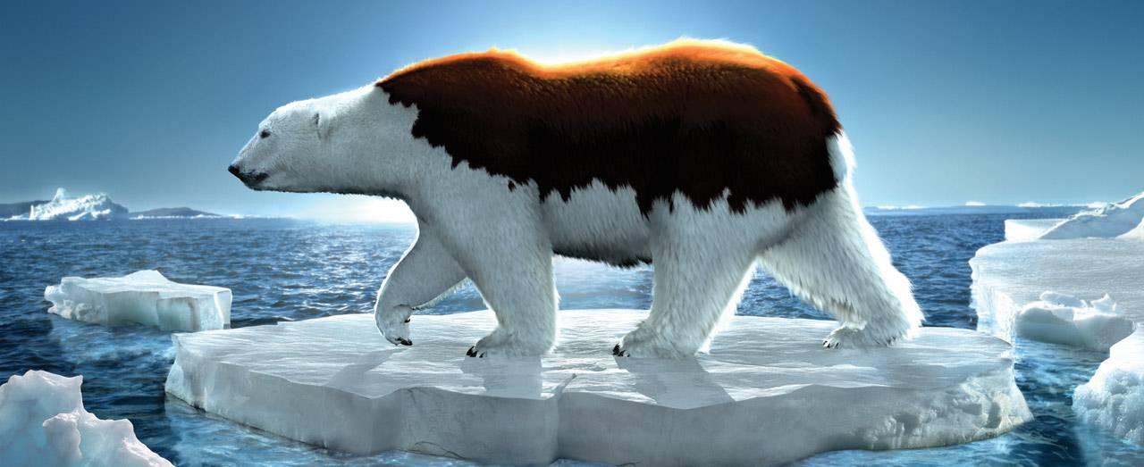 greenpeace-bear