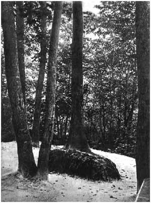 tumba de tolstoi